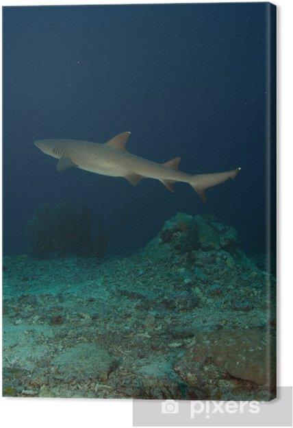 Tableau sur toile Tiburon - Sous l'eau