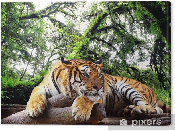Tableau sur toile Tiger cherchez quelque chose sur le rocher dans la forêt tropicale à feuilles persistantes - iStaging