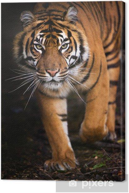 Tableau sur toile Tiger En sortant de l'ombre - Thèmes