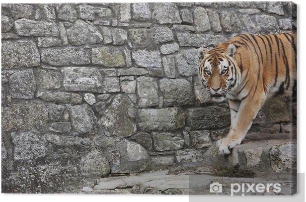 Tableau sur toile Tigre de Sibérie dans son territoire - Mammifères