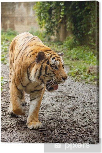 Tableau sur toile Tigre du bengale - Thèmes