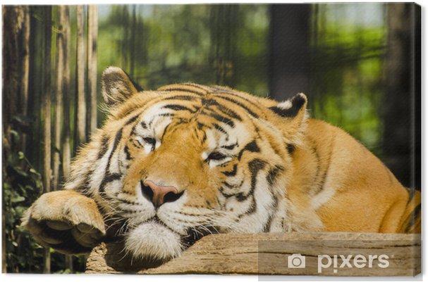 Tableau sur toile Tigre - Thèmes