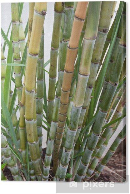 Tableau sur toile Touffe de canne à sucre - Agriculture