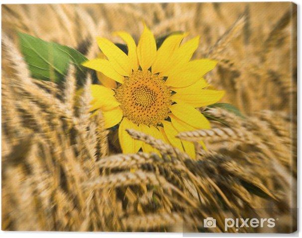 Tableau sur toile Tournesols dans le champ de blé - Agriculture