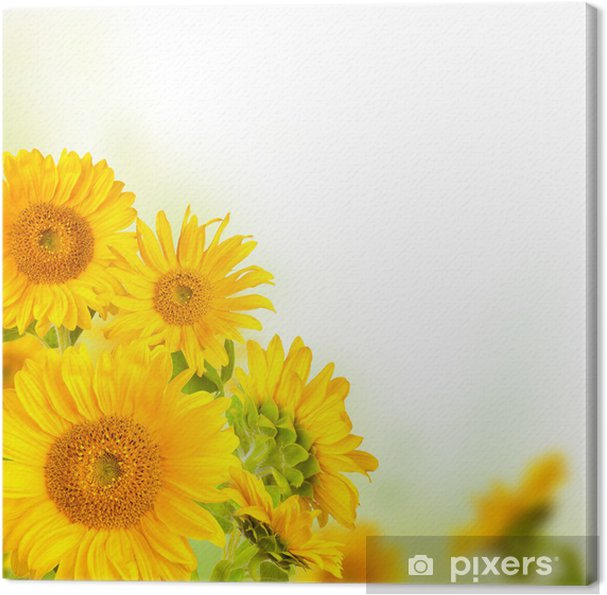 Tableau sur toile Tournesols - Fleurs