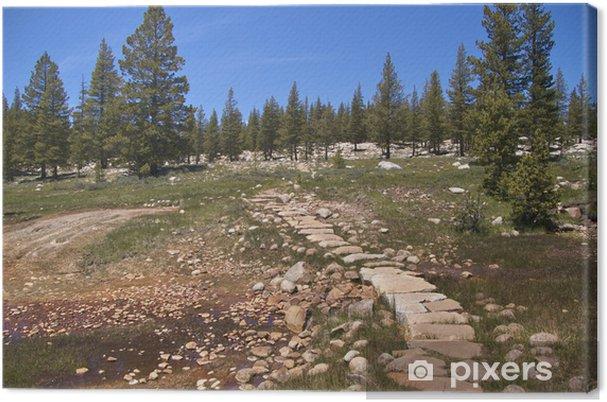 Tableau sur toile Traînée par Soda Springs, bouillonnement de l'eau froide, Yosemite NP - Amérique
