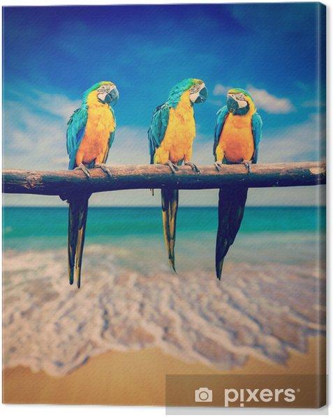 Tableau sur toile Trois perroquets (bleu et jaune Ara (Ara ararauna) connaît également une - Thèmes