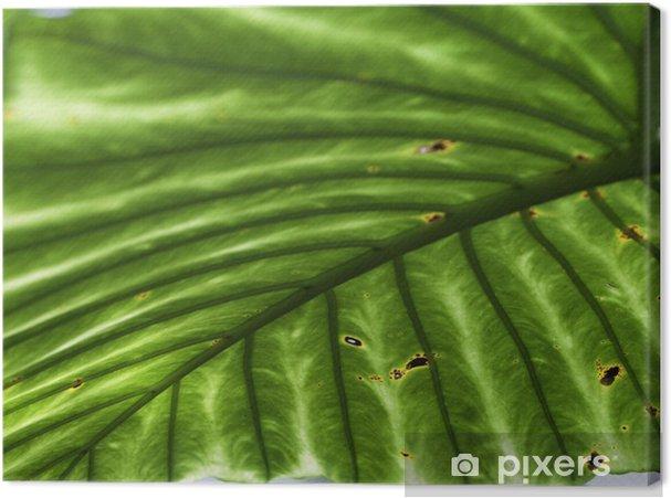 Tableau palme vert 1 tableaux sur toile tropicale palme detail feuille fond vert