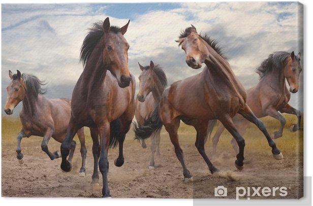 Tableau sur toile Troupeau de chevaux. - Chevaux