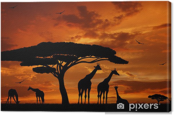 Tableau sur toile Troupeau de girafes dans le soleil couchant -