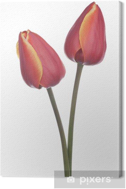 Tableau sur toile Tulipe - Fleurs
