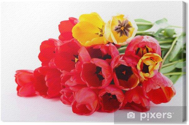 Tableau sur toile Tulipes colorées isolé sur blanc - Fleurs