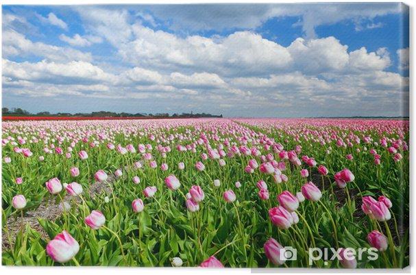 Tableau sur toile Tulipes roses crémeuses sur terrain néerlandais et ciel bleu - Thèmes