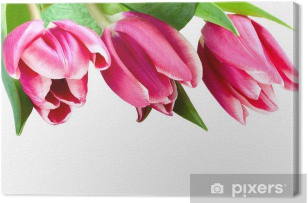 Tableau sur toile Tulipes roses sur un fond blanc, isolé - Célébrations