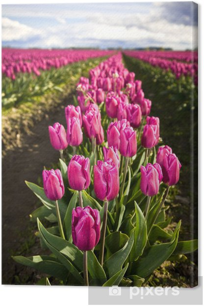 Tableau sur toile Tulipes roses - Fleurs