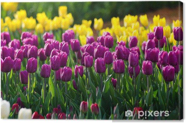 Tableau sur toile Tulips - Thèmes
