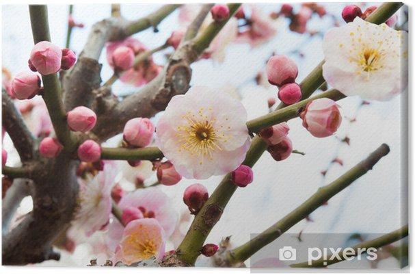 Tableau sur toile Umeno Hana - Fleurs