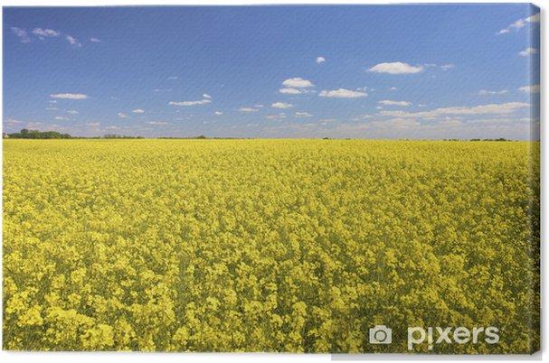 Tableau sur toile Un champ de colza jaune frais en été avec un ciel bleu - Saisons