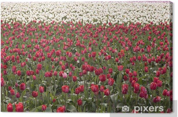Tableau sur toile Un champ de tulipes - Saisons