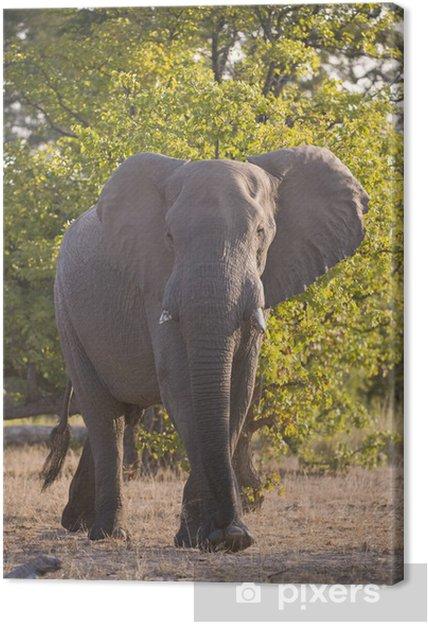 Tableau éléphant foret 1 tableaux sur toile un grand elephant emerge de la foret