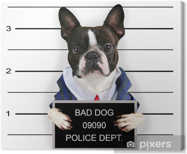 Tableau sur toile Un mugshot d'un mauvais chien - Mammifères