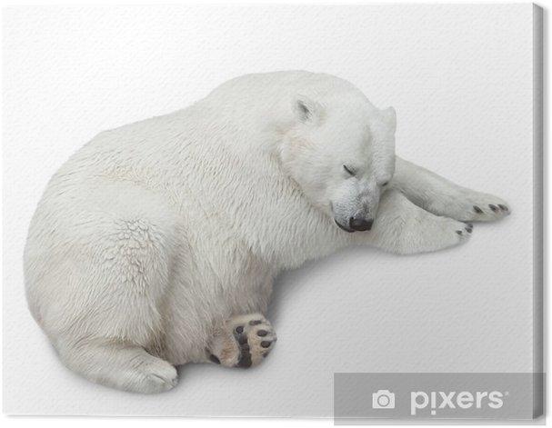 Tableau sur toile Un ours polaire - Mammifères