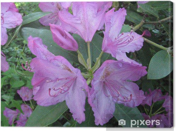 Tableau rhododendron rose 1 tableaux sur toile un rhododendron