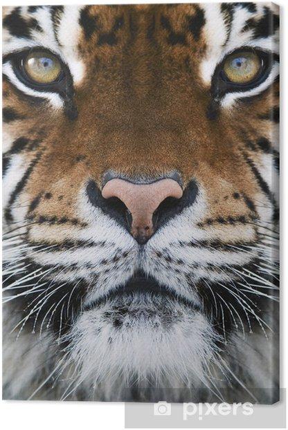 Tableau sur toile Un tigre - Thèmes