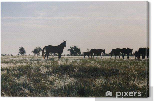 Tableau sur toile Un troupeau de chevaux paissant dans la steppe à l'aube - Animaux