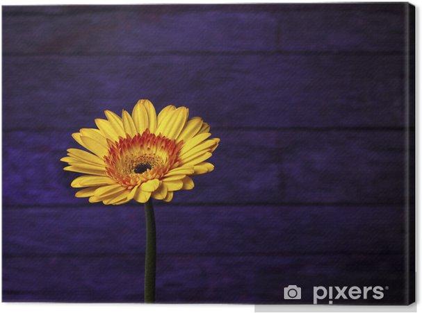 Tableau sur toile Une belle Gerbera Daisy or sur un fond violet uniques - Fleurs