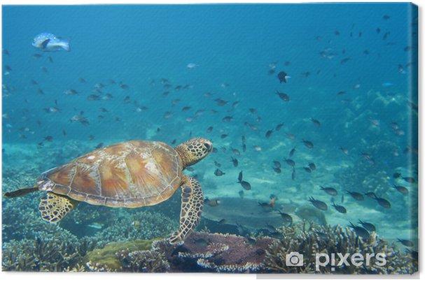Tableau sur toile Une tortue de mer portrait de près tout en vous regardant - Poissons