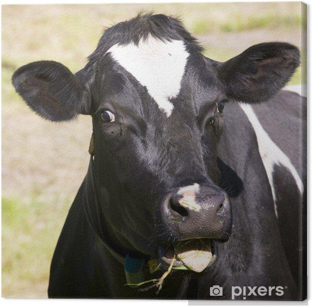 Tableau sur toile Vache hollandaise - Mammifères