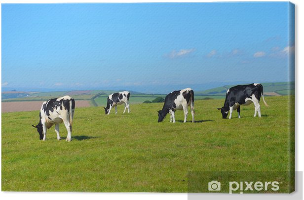 Tableau sur toile Vaches dans un champ de Devon, en Angleterre - Mammifères