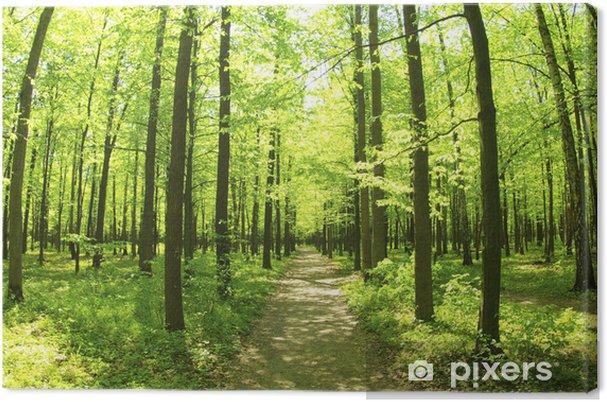 Tableau sur toile Vert et foret - Forêt