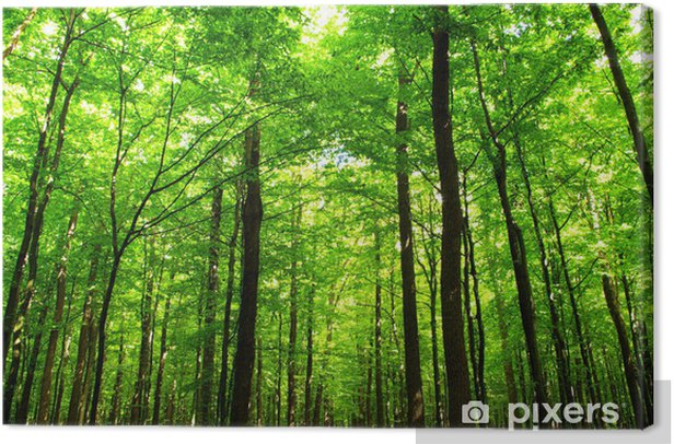 Tableau sur toile Vert juteux de la forêt - iStaging