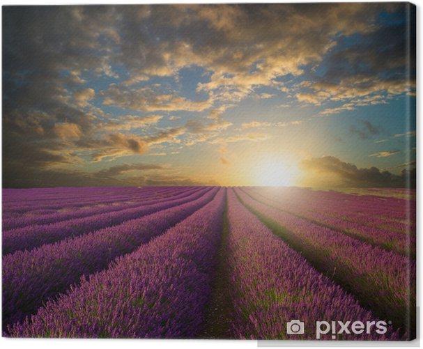 Tableau sur toile Vibrant Coucher de soleil sur la lavande champ paysage - Thèmes