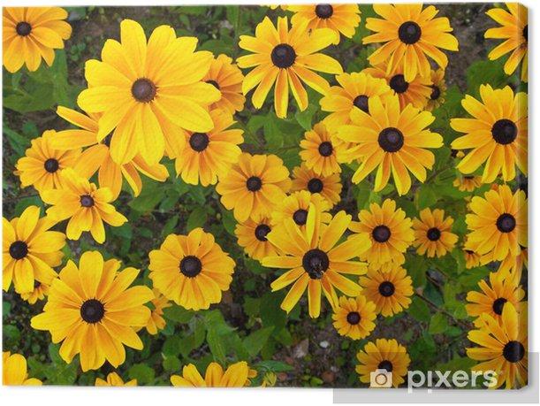 Tableau sur toile Viele Sonnenhüte - Fleurs
