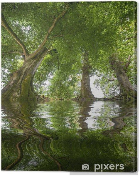 Tableau sur toile Vieux trres et une rivière - Arbres