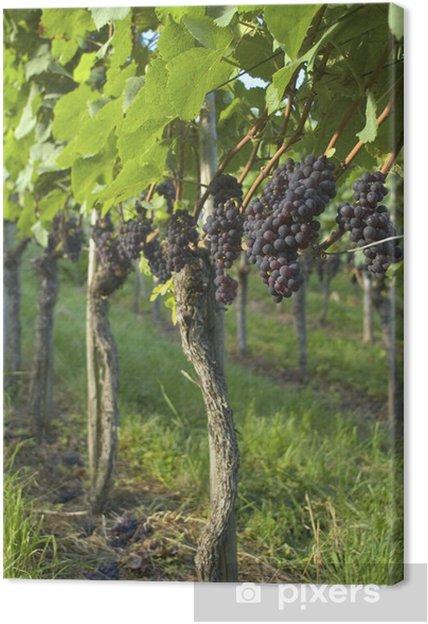 Tableau sur toile Vignoble Weil am Rhein Allemagne - Fruits