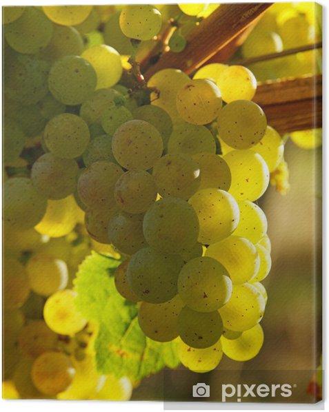 Tableau sur toile Vin dans le soleil du soir - Vin Blanc - Alcool