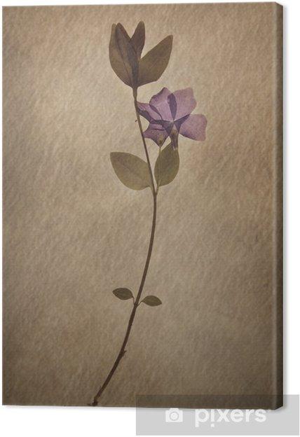 Tableau sur toile Vinca minor - Fleurs
