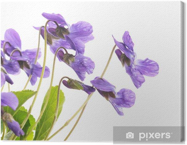 Tableau sur toile Violettes - Saisons