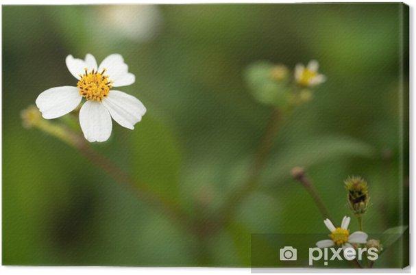 Tableau sur toile Wedelia trilobata - Fleurs