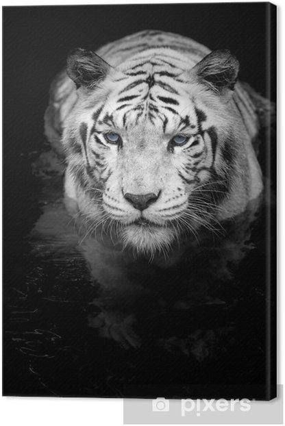 Tableau sur toile White tiger - Styles