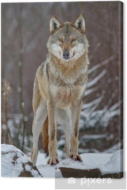 Tableau sur toile Wolf - Thèmes