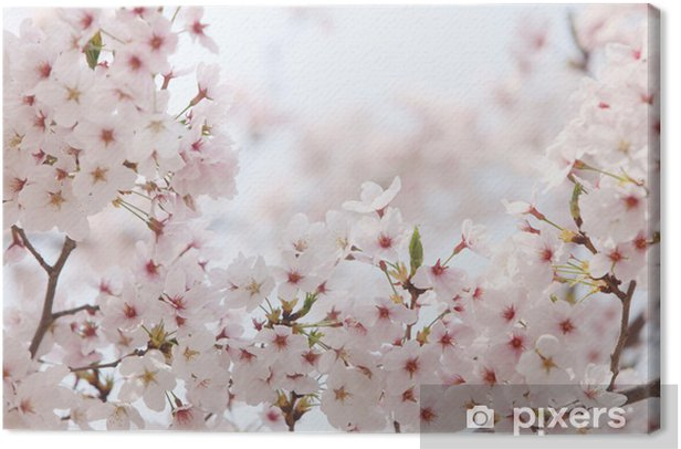 Tableau sur toile Yedoensis - Fleurs