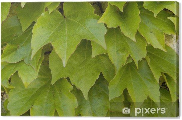 Tableau sur toile Yedra-113 - Saisons
