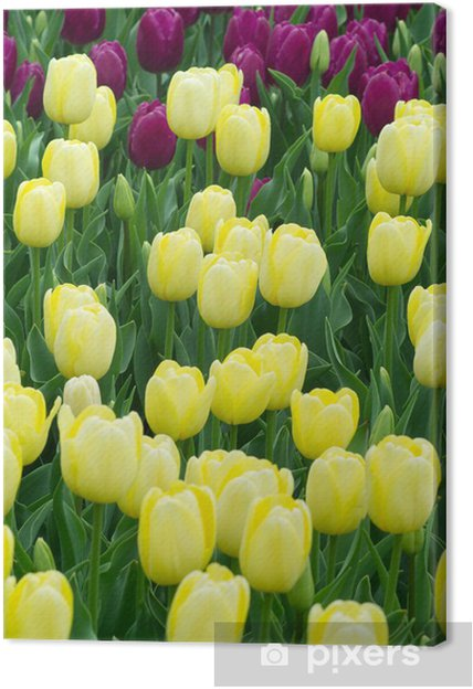Tableau sur toile Yellow tulips - Villes américaines