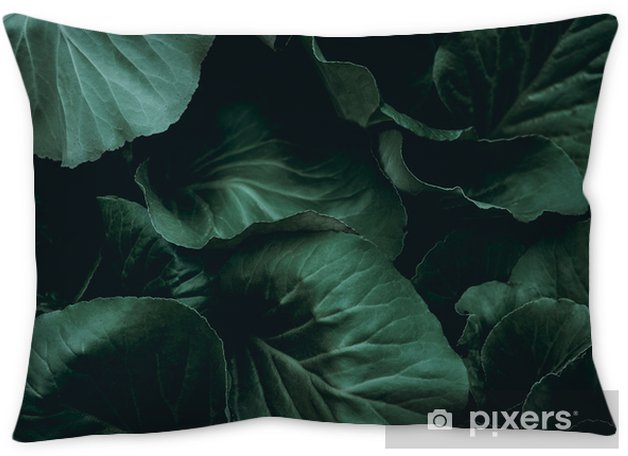 Plant background Throw Pillow - Graphic Resources