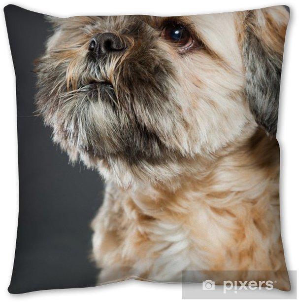 Shih Tzu Dog On Dark Grey Background Studio Portrait Throw Pillow Pixers We Live To Change